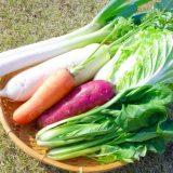 日持ちする野菜はどれ?【野菜を日持ちさせるための冷凍テクニック】