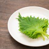シソ(大葉)の栄養と効果【シソを使ったおすすめ料理レシピ】