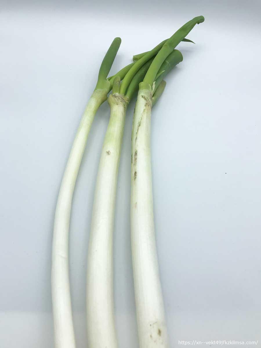 ビオマルシェの野菜お試しセットの白ネギ
